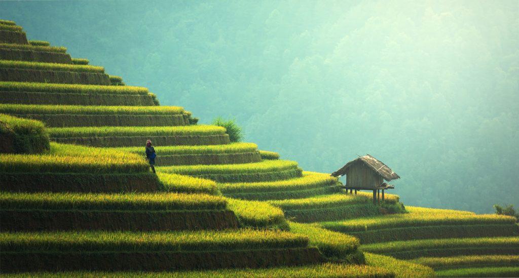 AIMS Thailand